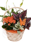 Mothers Day Basket Arrangements  - Free UK delivery