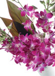Oriental Orchids - Free UK delivery