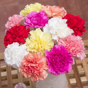 PRODUCT_FLOWERS_12_Classic_Carnations_image1_460x460.jpg
