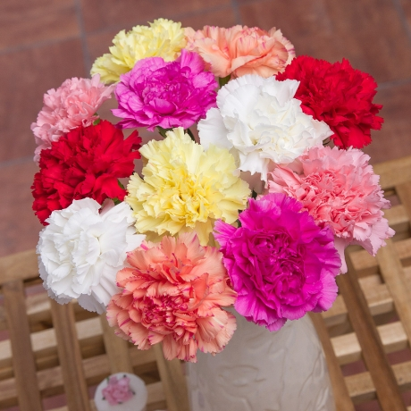 PRODUCT FLOWERS  Classic Carnations with Gypsophila image