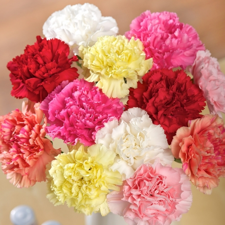 PRODUCT FLOWERS  Classic Carnations image