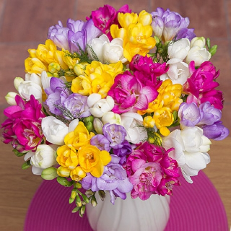 PRODUCT FLOWERS  Fragrant Freesias image