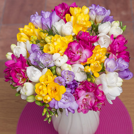 PRODUCT_FLOWERS_Fragrant_Freesias_image1_460x460.jpg