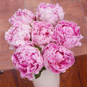PRODUCT_FLOWERS_Pink_Peonies_image1_460x460.jpg