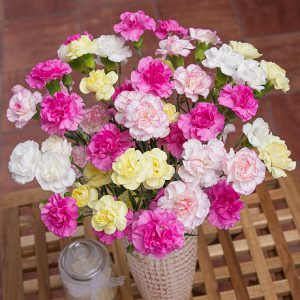 PRODUCT_FLOWERS_Spray_Cascade_image1_460x460.jpg