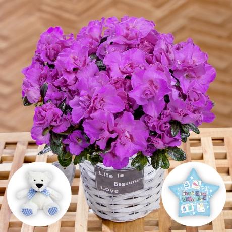 PRODUCT PLANTS Baby Boy Azalea Gift image