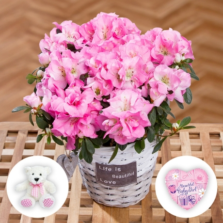 PRODUCT PLANTS Baby Girl Azalea Gift image