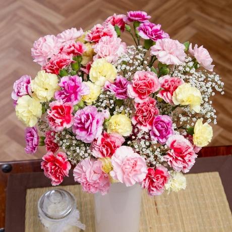 PRODUCT FLOWERS Spray Cascade XL image
