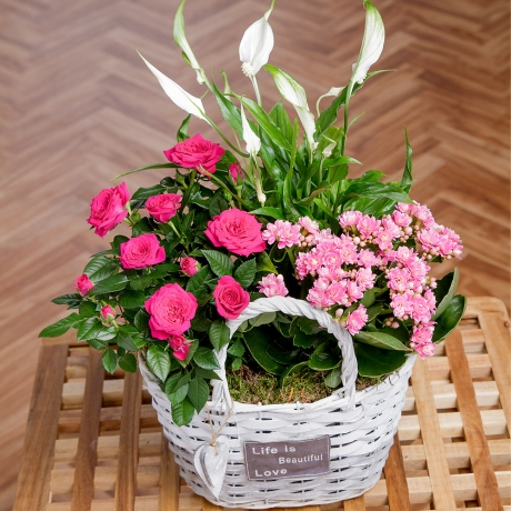 PRODUCT PLANTS Summer Flowering Basket image