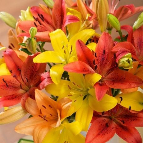 PRODUCT FLOWERS Autumn Luxury Lilies Large image