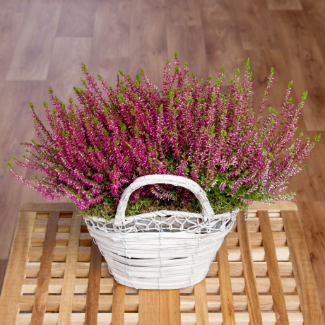 PRODUCT PLANTS Duo Heather Basket image