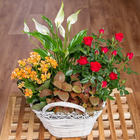 PRODUCT PLANTS Fall Flower Basket image