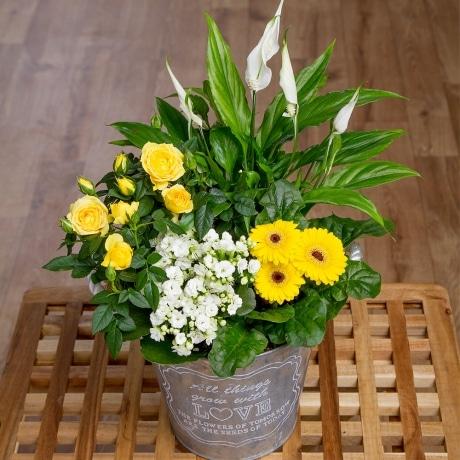 PRODUCT PLANTS Spring Flower Planter image