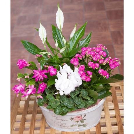 PRODUCT PLANTS Vintage Flower Planter image