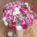 PRODUCT_FLOWERS_Berry_Charm_NEW_image1_460x460.jpg