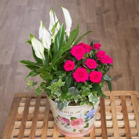 PRODUCT PLANTS Summer Flowering Planter image