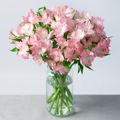PRODUCT FLOWERS Simply Alstromeria XL image
