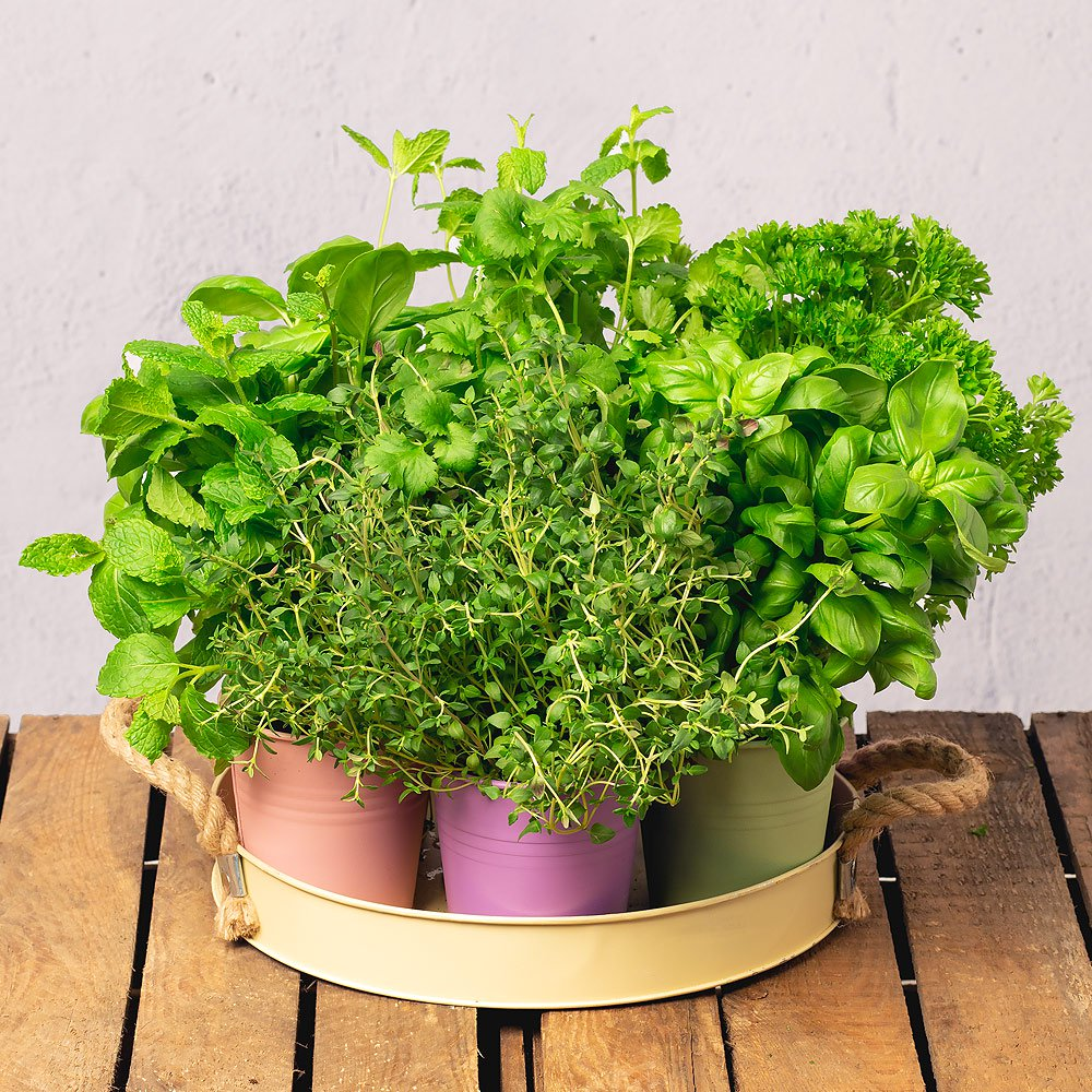 PRODUCT PLANTS Grow Your Own Herb Garden image