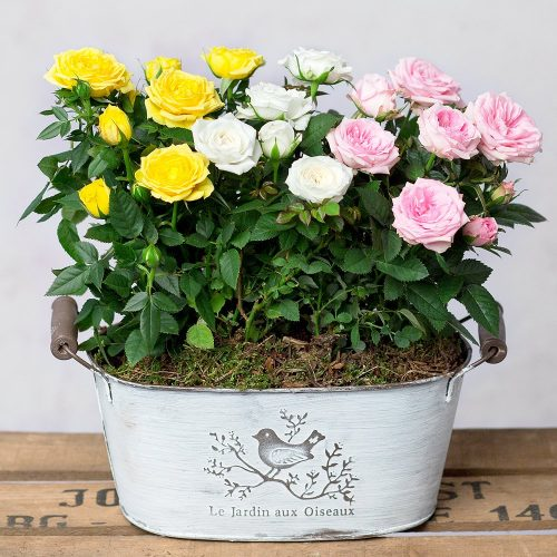PRODUCT_PLANTS_Summer_Rose_Planter_image1_460x460.jpg