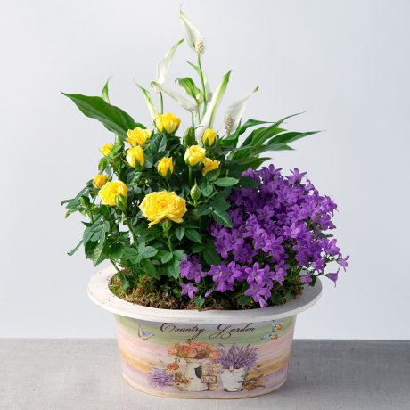 PRODUCT_PLANTS_Vibrant_Summer_Planter_image1_460x460.jpg