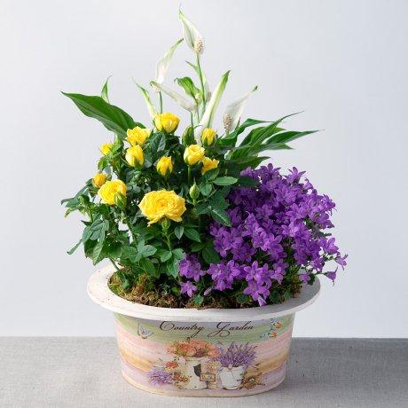 PRODUCT PLANTS Vibrant Summer Planter image