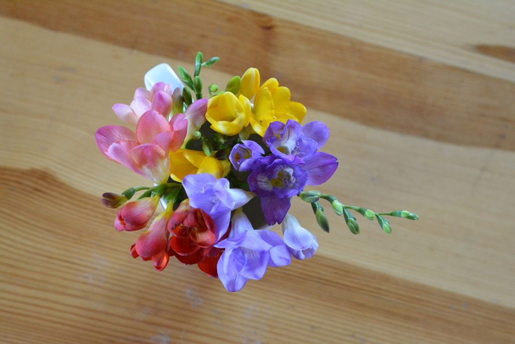 Colourful Freesias