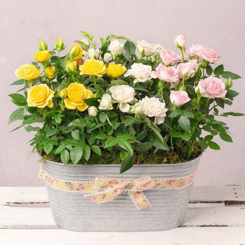 Spring Roses Planter 1